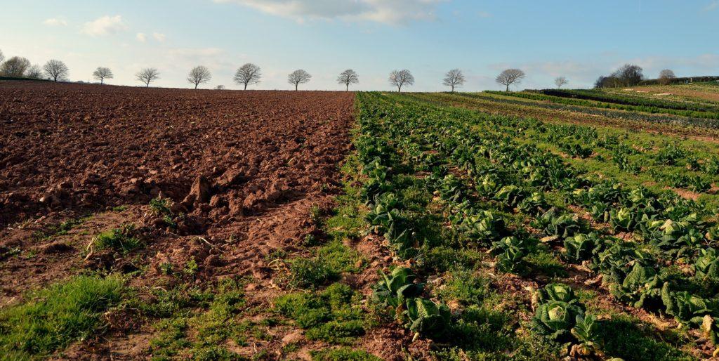 Bio-UP Biogasopwaardering