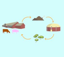 Blog Kringlooplandbouw en mest